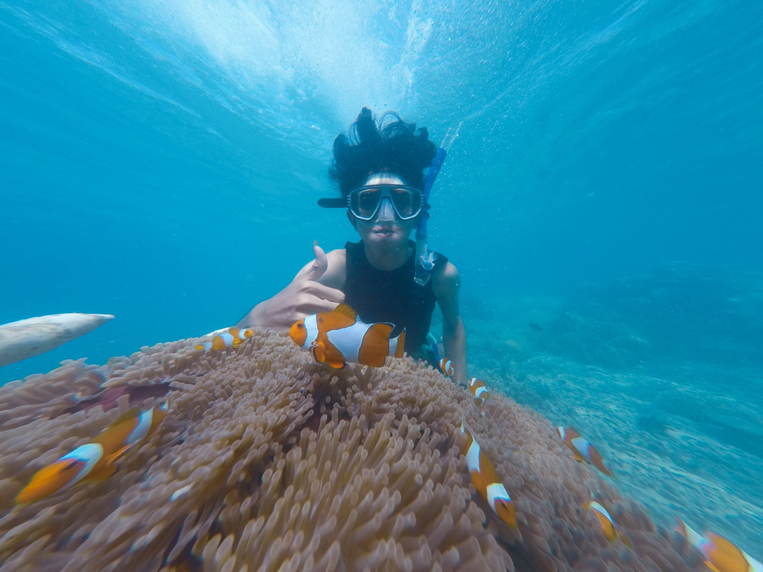 Snorkeling with Nemo fish