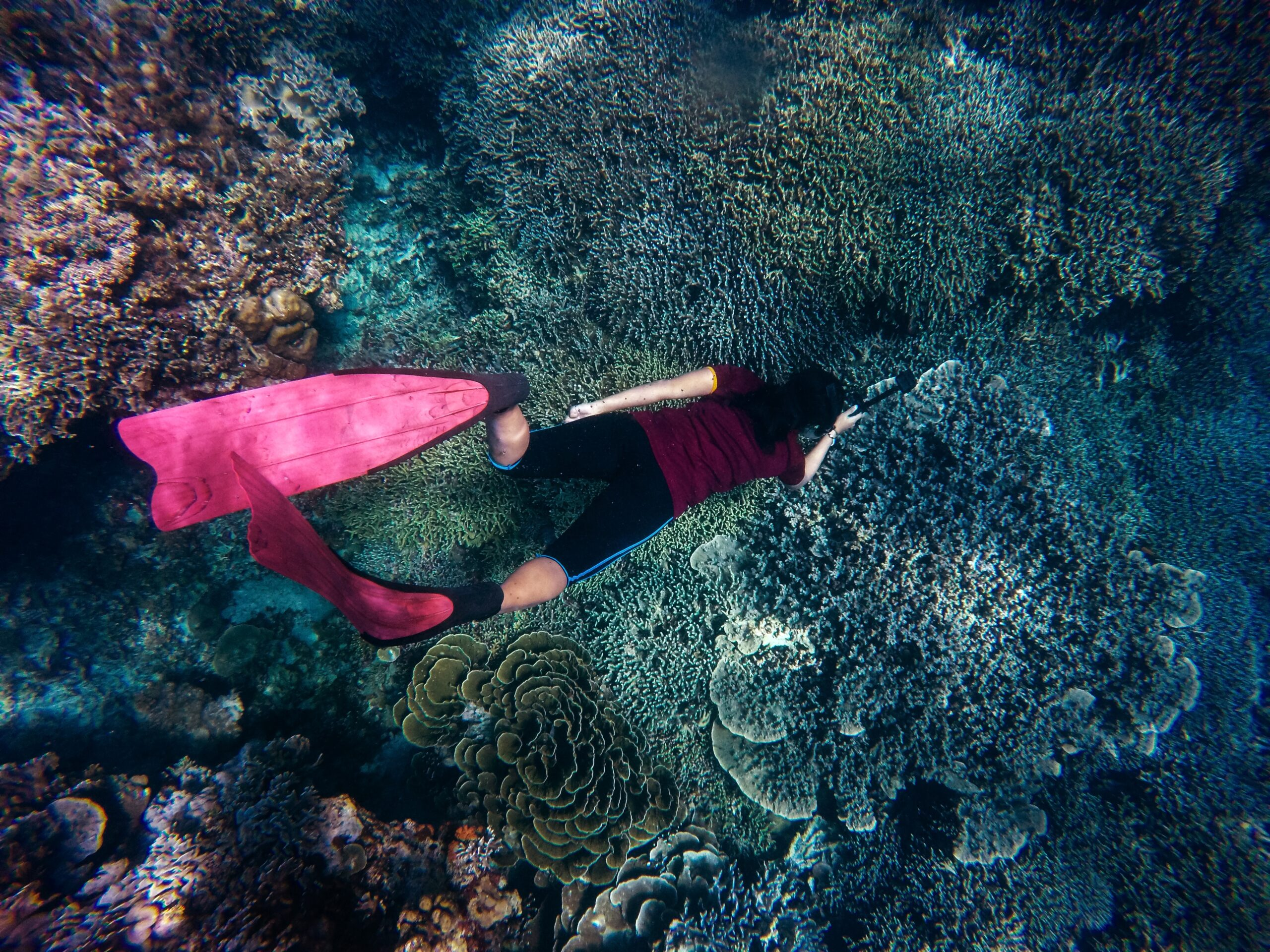 Snorkeling with beautiful corals